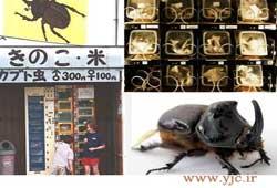 عكس/ فروش سوسك در خود پردازهاي ژاپن
